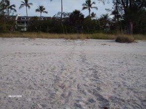 Turtles tracks on the beach